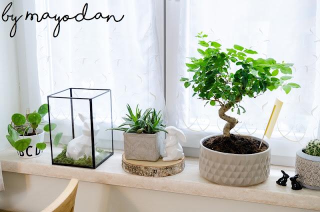 Dekoration Zimmerpflanzen
