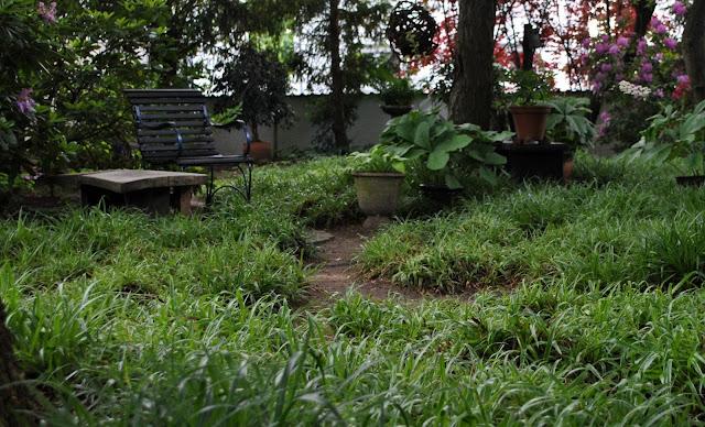 Schattengräser als Rasenersatz