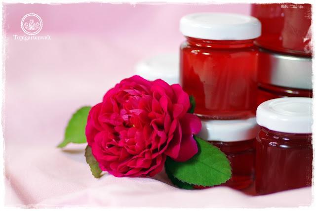 Duftrosen welche sich für Rosenblütensirup eigenen - Foodblog Topfgartenwelt