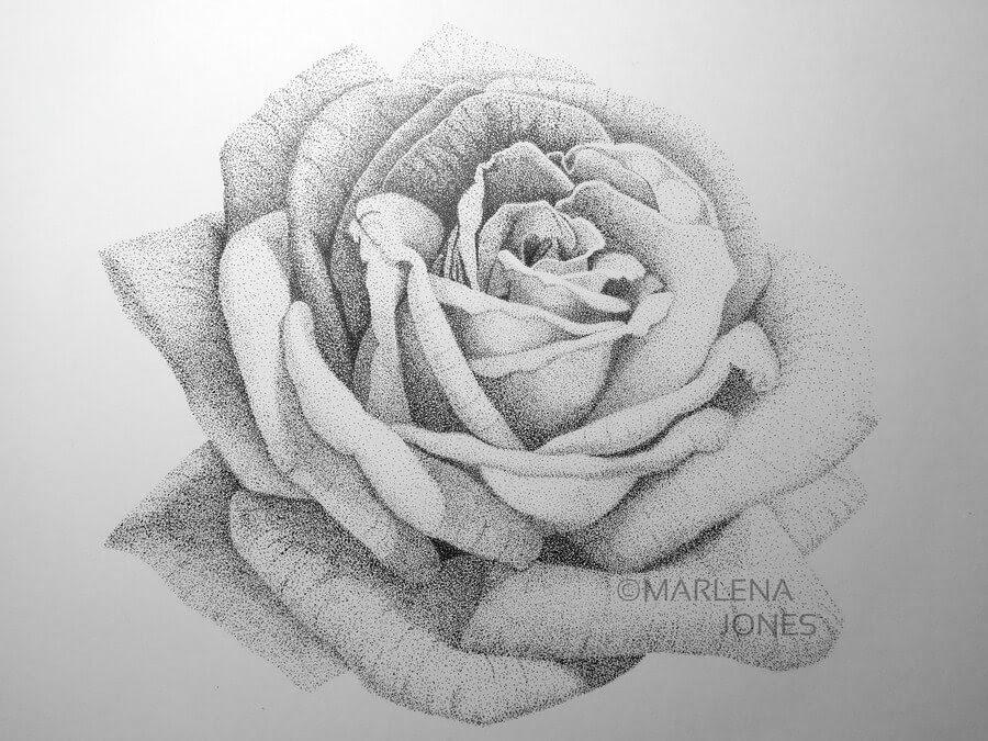08-Rose-4-Marlena-Jones-www-designstack-co
