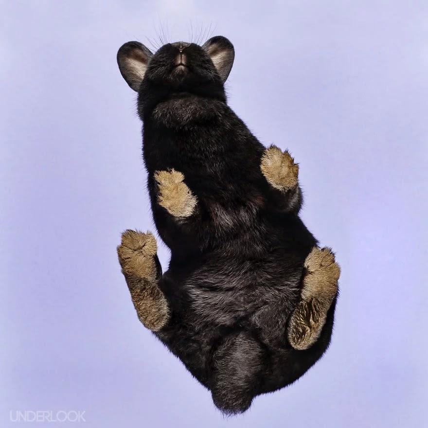 Image Result For Cerita Binatang Kelinci