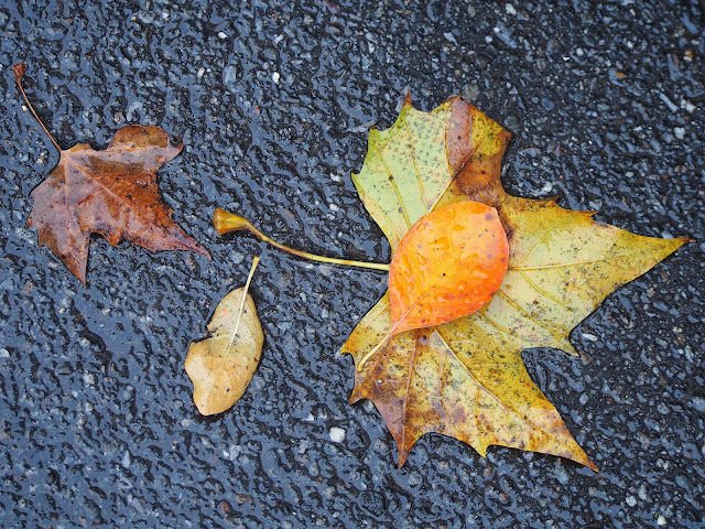 Co-Existing #coexisting  #fall #fallincentralpark #leaves #foliage #fallenleaves #rainyday #nyc 2014
