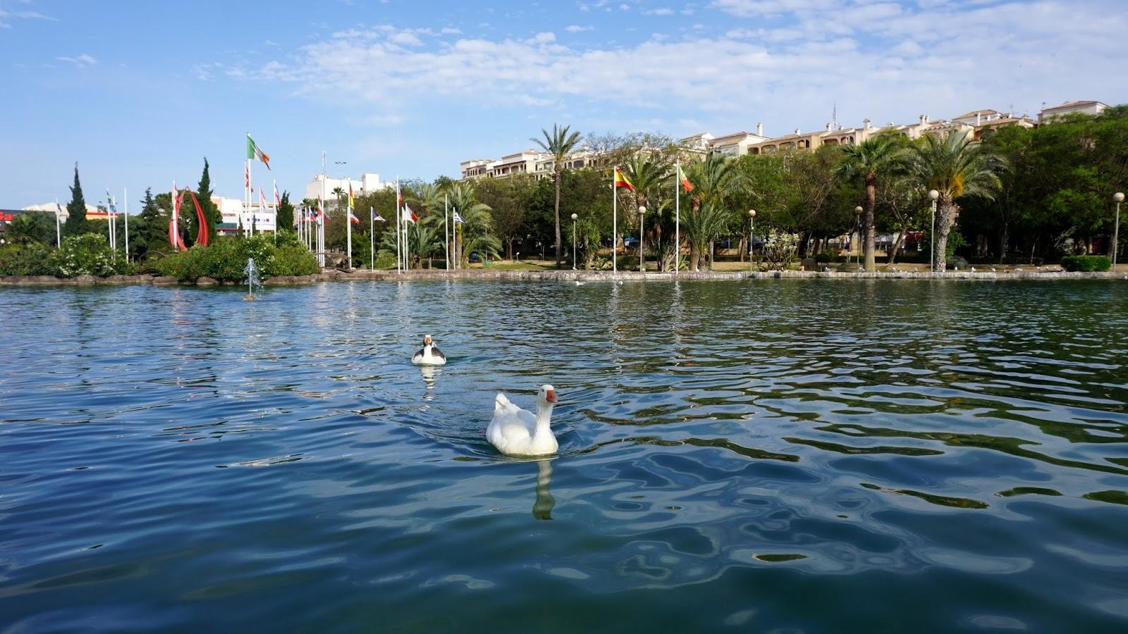 gęsi, Parque de Las Naciones w Torrevieja, atrakcje Torrevieja, atrakcje południowej Hiszpanii