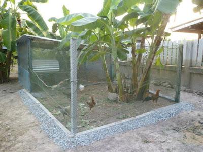 Aussengehege Hühnerstall Thailand