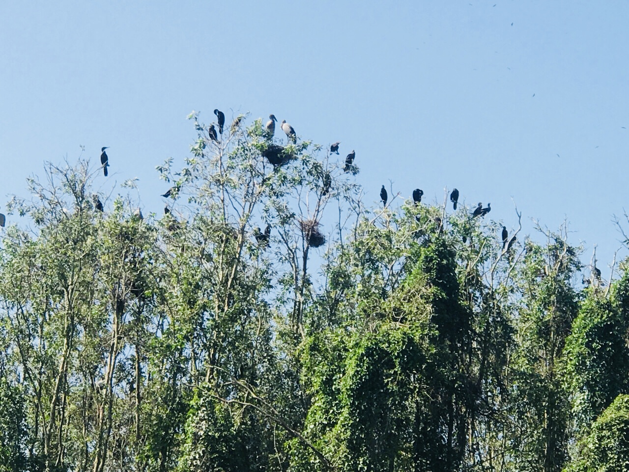 tràm chim gáo giồng đồng tháp