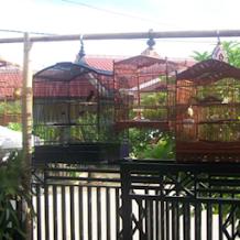 Beberapa Manfaat Penjemuran Burung Secara Rutin