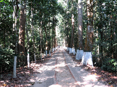 Lawachara rain forest in Moulovibazar