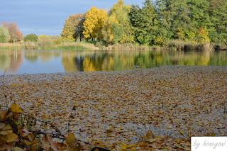 A Photo a Week Challenge: Leaves herbstlicher See bunt gefärbt von Blättern