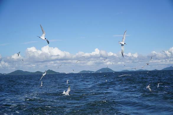 chim biển săn mồi
