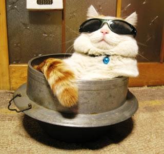 Gambar Kucing Pakai Kacamata Lucu