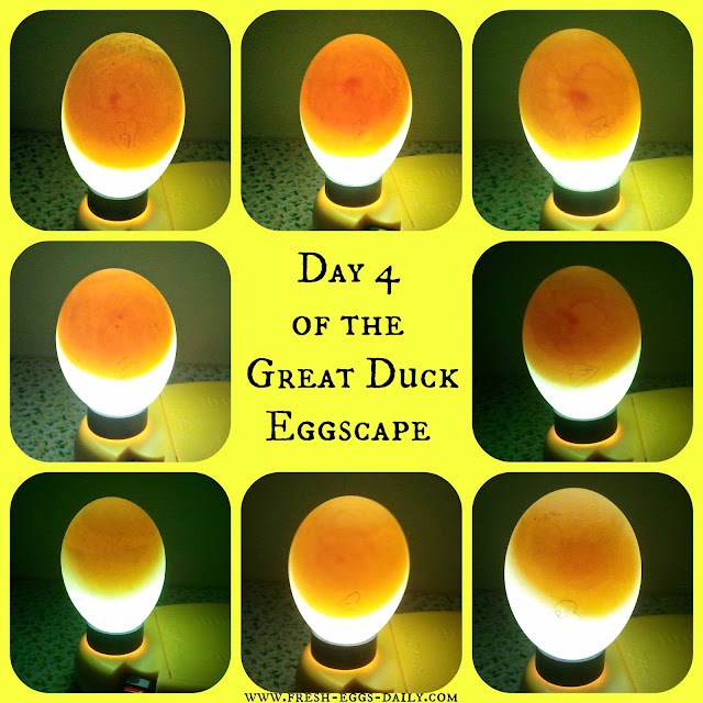The Great Duck Hatching Eggscape
