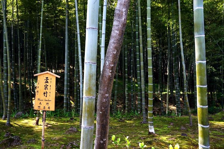 Arashiyama Bamboo Grove, Kyoto, Japan, Euriental