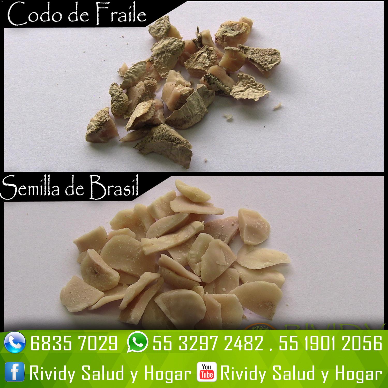 Semilla de brasil cdmx Semilla de brasil es toxica
