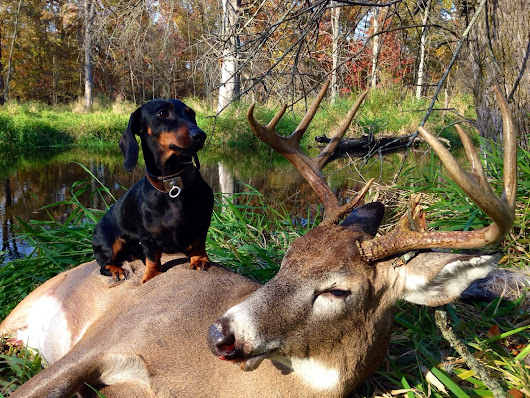Michigan's Professional Deer blood Tracking Dog services