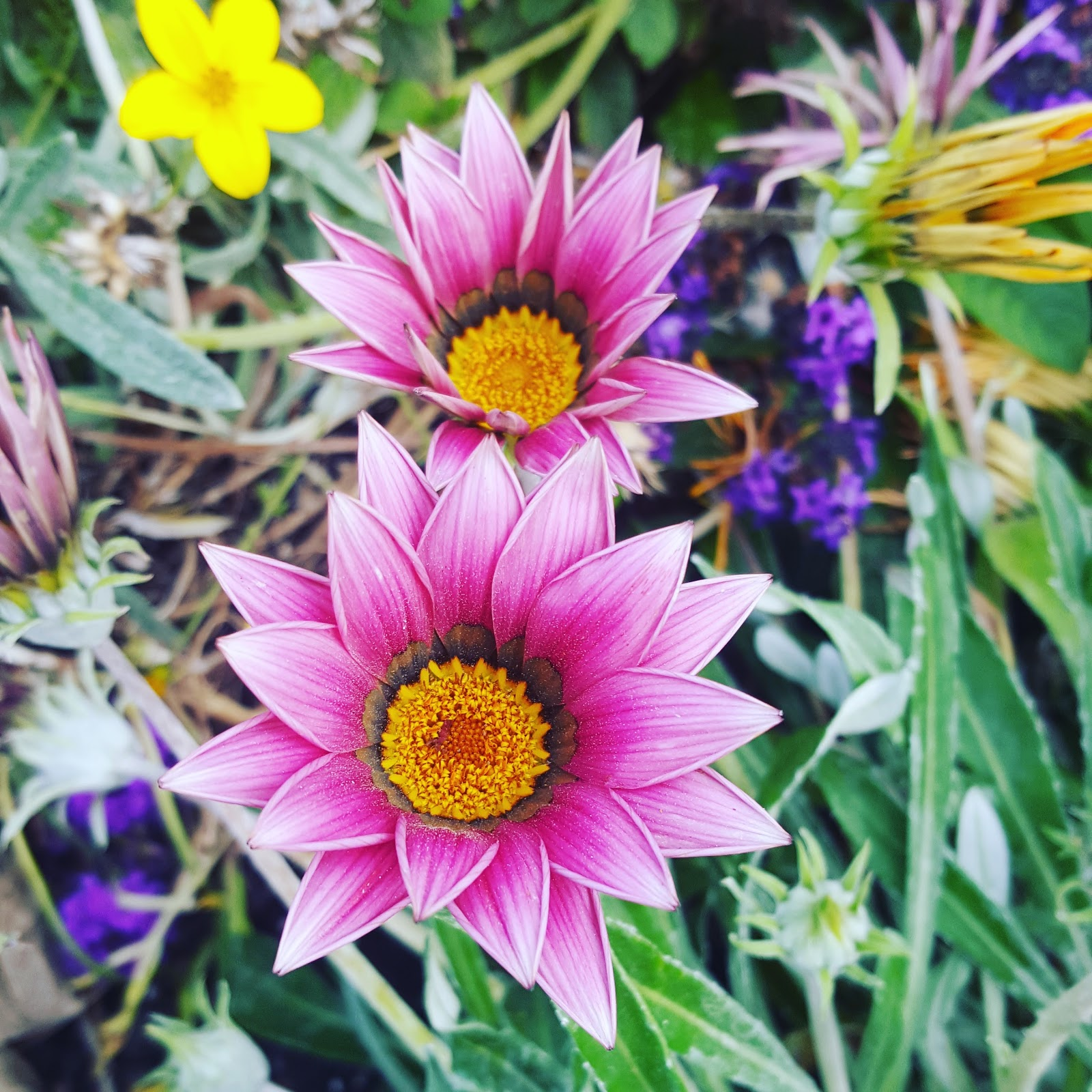 Late Summer Flowers Photo by @clairejustineo