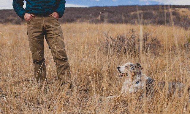Собака друг для человека