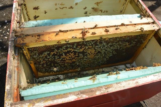 Ανάπτυξη μικρού μελισσιού: Ένα δυνατό κόλπο, μέσα απο την εμπειρία μου...
