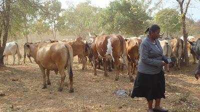 SAM 2139%2B %2BCopy - Ufugaji katika shamba la Rushu Ranchi Kisarawe