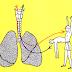عمليّة التنفس - معلومات مفيدة عن التنفّس