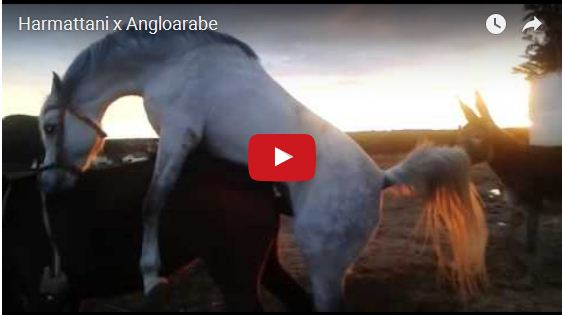 Horse breeding ~ AMAZONIA NEWS(DANY)