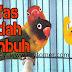 Tips cara mengobati lovebird terkena nafas