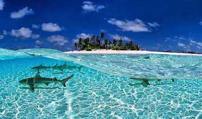 Tiburones en las Maldivas