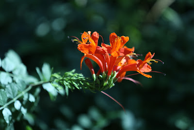 Original Image of Orange Flowers
