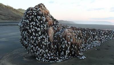 Objek Misterius ditemukan di Pantai Selandia Baru