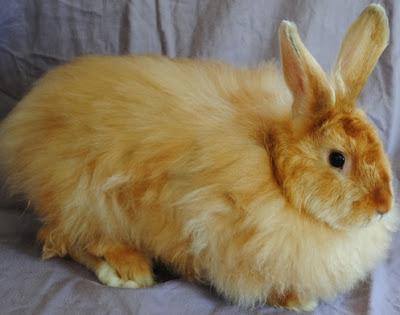 Jenis-jenis kelinci anggora satin