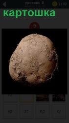 На картинке показан съедобный клубень картошка, который мы все привыкли покупать или сами выращивать