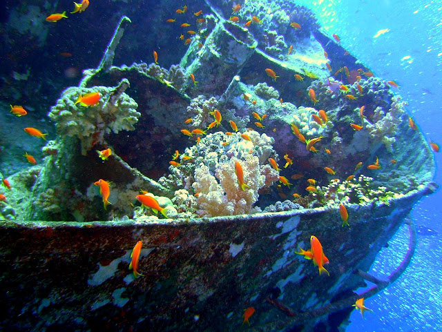 artificial reef, rosalie moeller, WW II, egypt, northern red sea