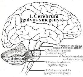 smegenų prekybos sistemos atsisiuntimas)