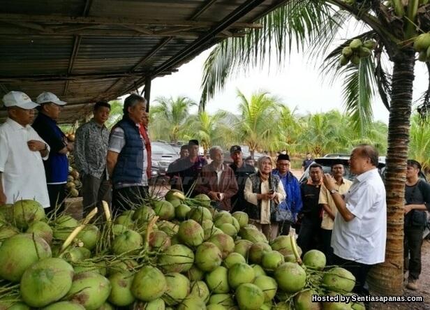 Ladang kelapa