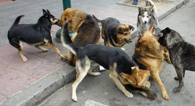 Mascotas jugando
