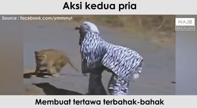 Asli Ngakak! Beginilah Aksi Konyol Dua Orang Berkostum Zebra yang Jadi Buruan Singa