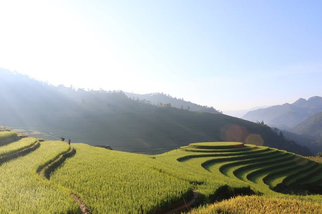 Mu Cang Chai beautiful surprise in the middle of the golden season to hold all visitors