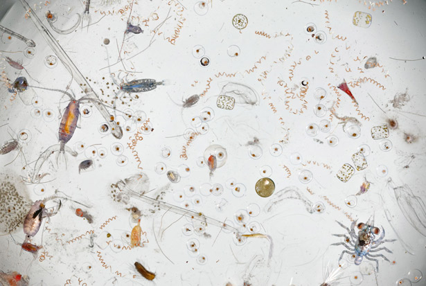 Microfauna em Ecologia