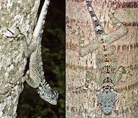 http://sciencythoughts.blogspot.co.uk/2014/11/four-new-species-of-treerunner-from.html