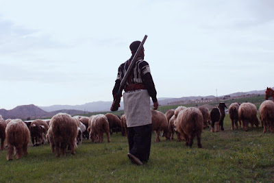 A bakhtiari man grzing his herd.