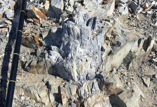 В Антарктиде нашли остатки огромных древних деревьев