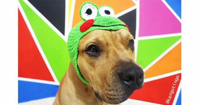 Gorros para tu mascotaFulares y tejidos KANGUTINGO - amigurumis, crochet y fular portabebé