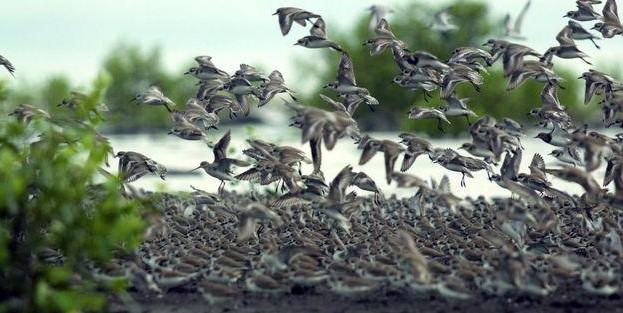 wisata burung taman nasional sembilang palembang
