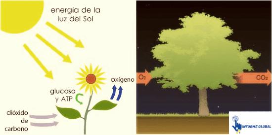 atp en la fotosintesis