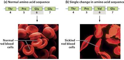 Pengertian Mutasi Gen, Proses, Jenis, Dan Contohnya  LENGKAP