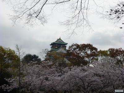 大阪城と染井吉野