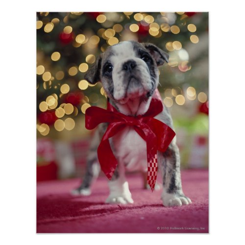 Christmas Puppy with Bow | Cute Photo Canvas