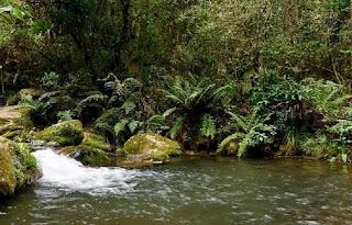 Sendero Ecológico de San Francisco - Bogota
