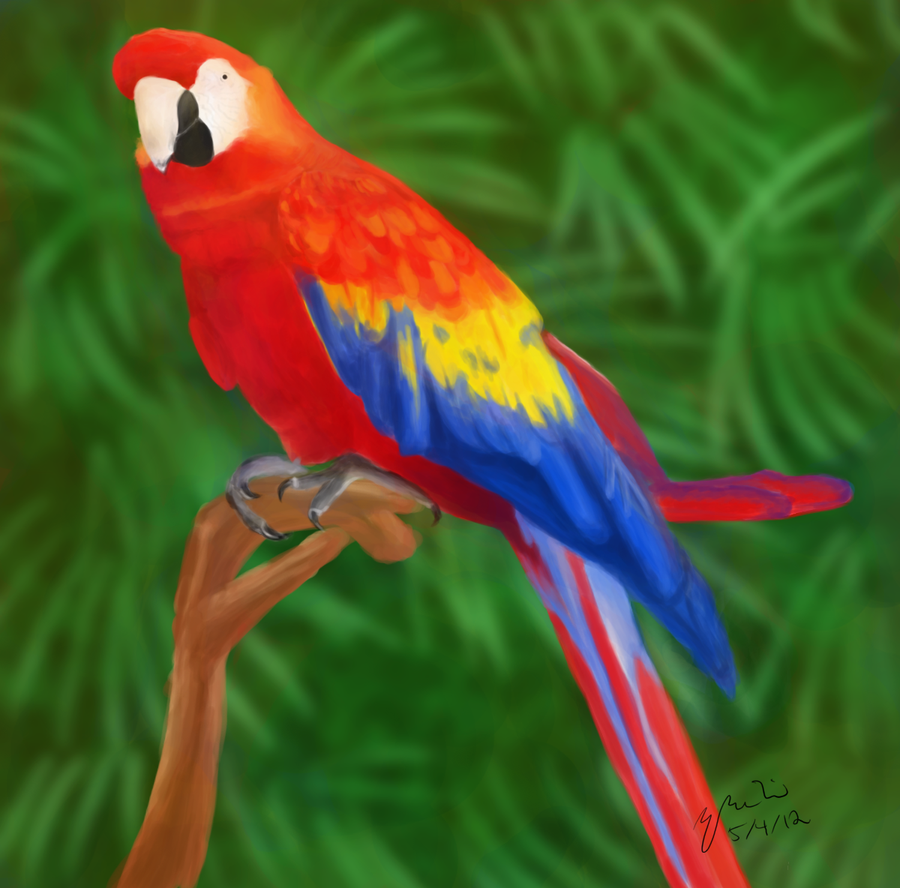 Exotic Animal Wallpaper Animal Beauty Beautiful Parrots P1