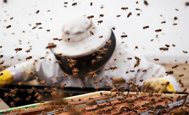 Μελισσοκόμος λέει αλήθειες «έξω από τα δόντια» για τη μυστικοπάθεια των παλιών που φοβούνται...