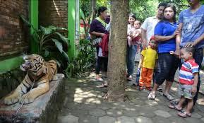 akcayatour, Travel Malang Semarang, Kebun Binatang Mangkang, Travel Semarang Malang